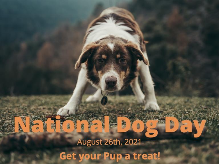 National Dog Day-4